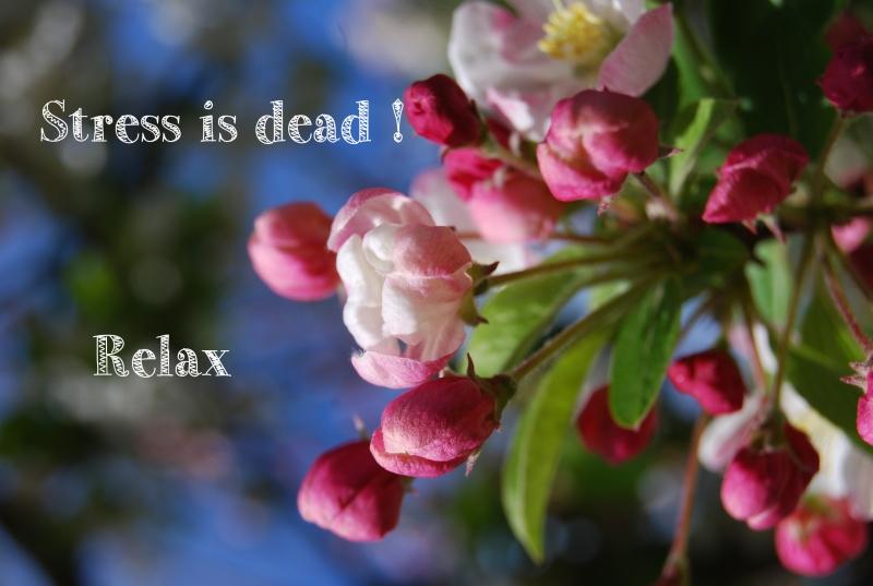 stress is dead